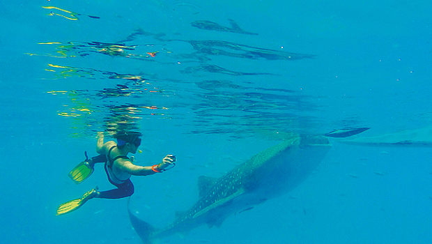 Swimming with Whale Sharks – -Oslob Bay, The Philippines